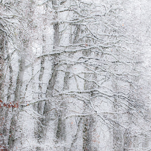 Vinterrelieff