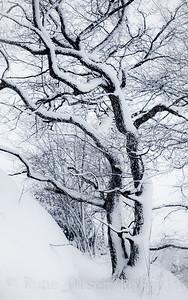 Vintereik