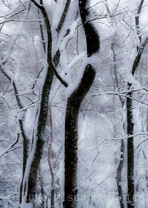 Vinterlinjer