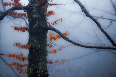 Fargeklatter i desemberskogen