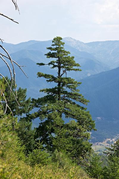 Devil's Peak, California