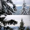 Z5  Tree Compare 1