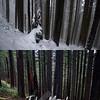 Z  Trees Compare