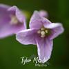 13  G Purple Flowers Close