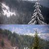 Z6  Tree Compare 2