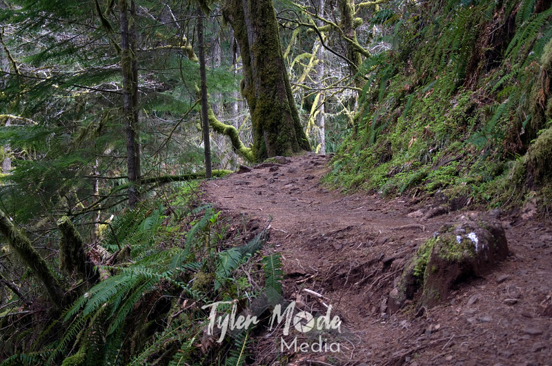 54  G Larch Trail