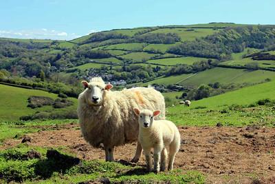 Devon Coasts