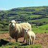 Combe Martin, North Devon coast.