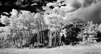 Aspens and rock outcropping - IR