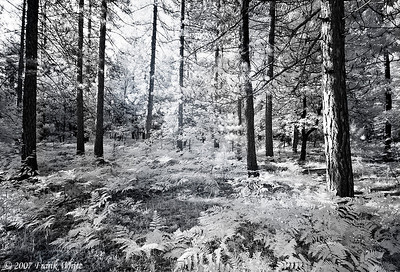 Northern Michigan woods IR #5