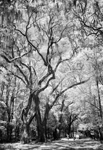 Through the woods at Wormsloe Plantation, Savannah GA