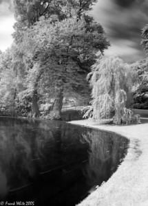 Digital IR pond #1, Longwood Gardens
