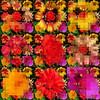9 Flower Panel 4