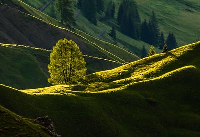 Lone Tree on a Ridge