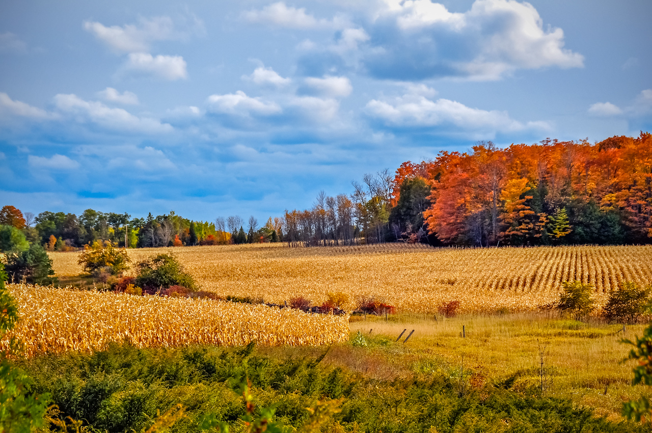 Fall Harvest Landscape