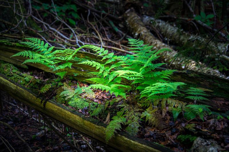 Nature's Planter