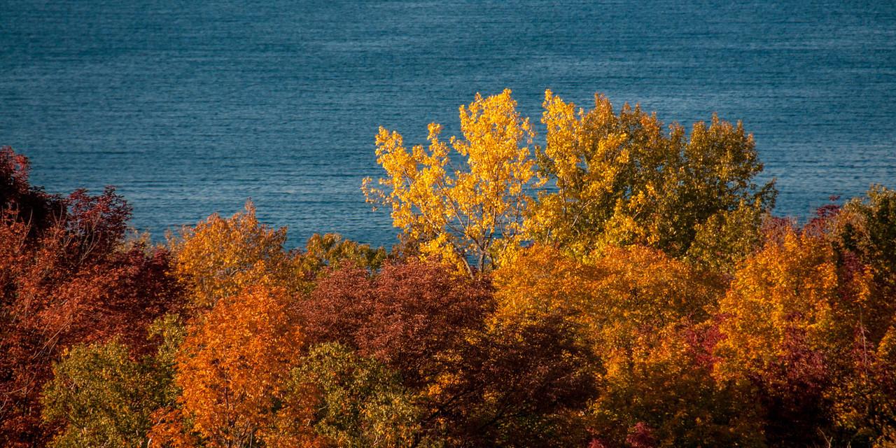 Treetops In Fall