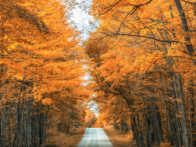 Color Canopy