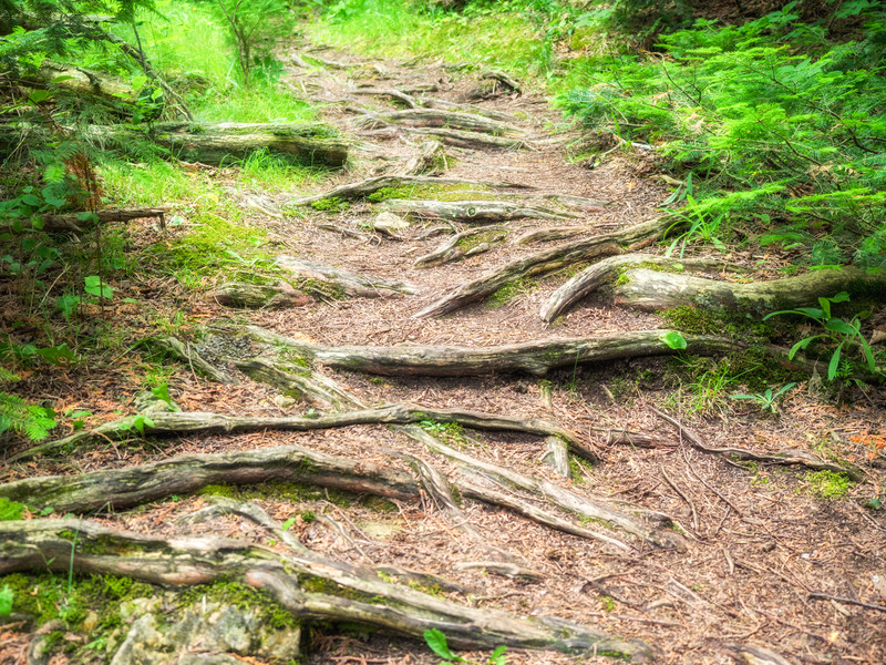 Nature's Staircase