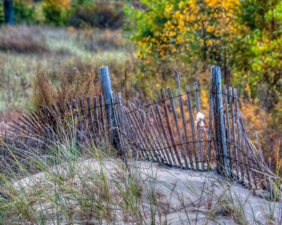 Fence On The Dunes