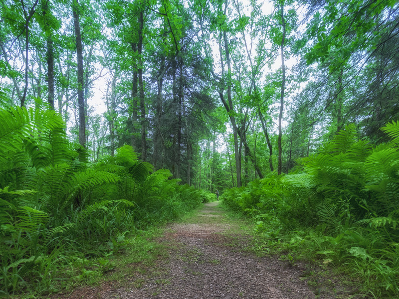 Morning On The Fern Trail