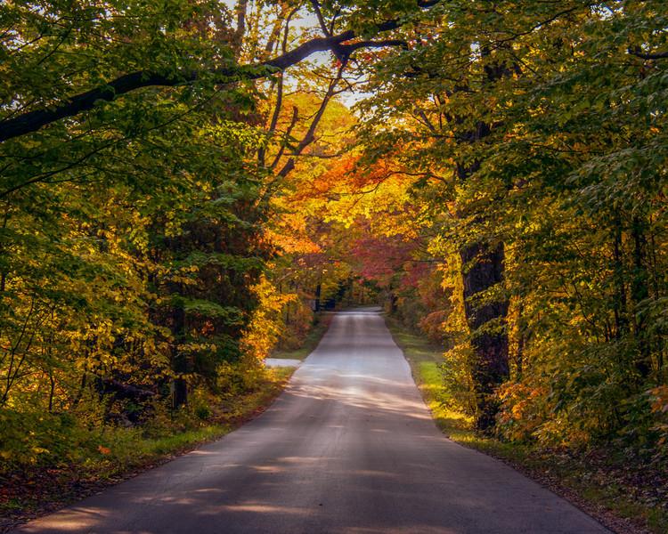 Fall Color Tunnel