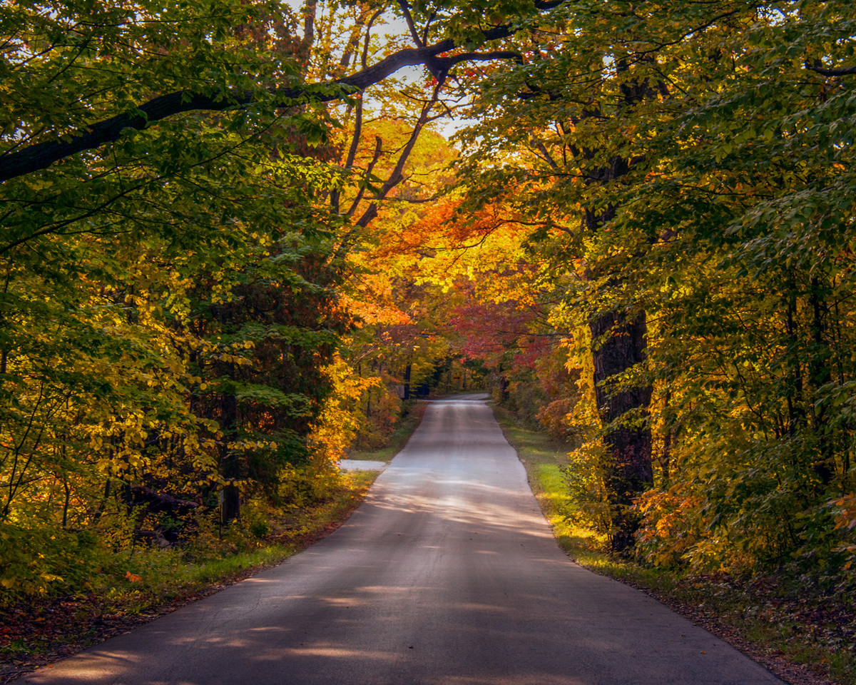Fall Color Tunnel