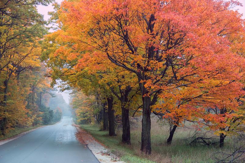 Roadside Color - 2016
