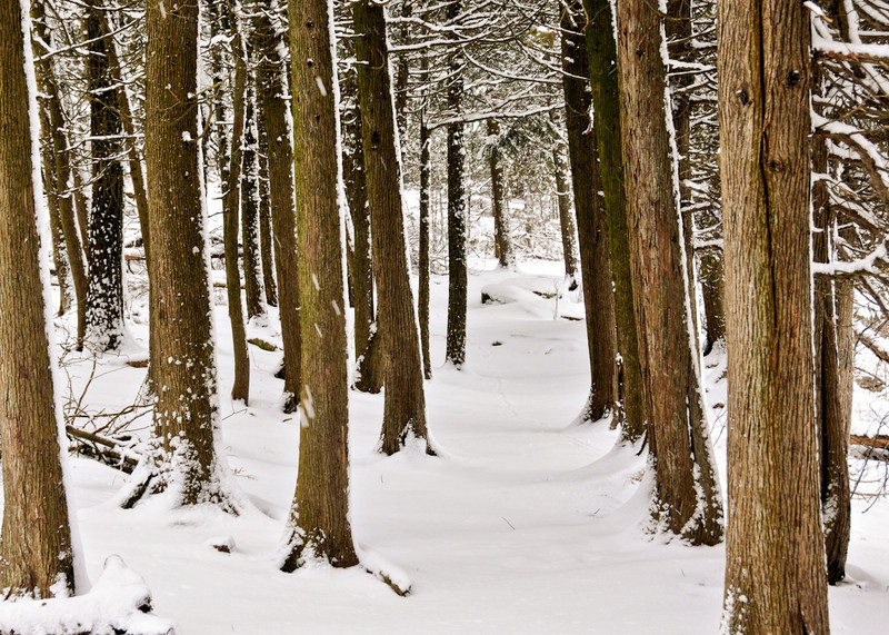 Winter's Path