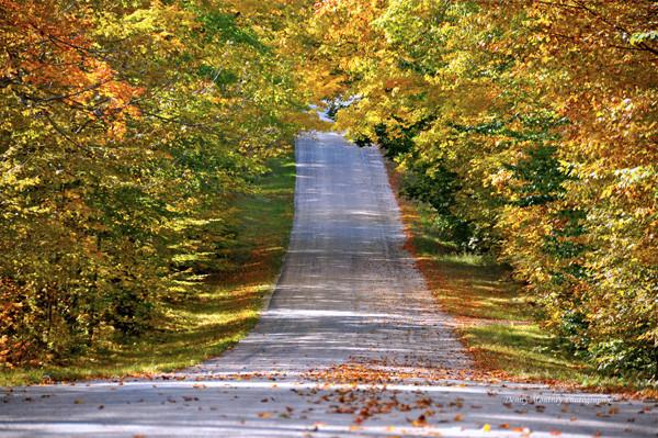 Greene Road In Fall
