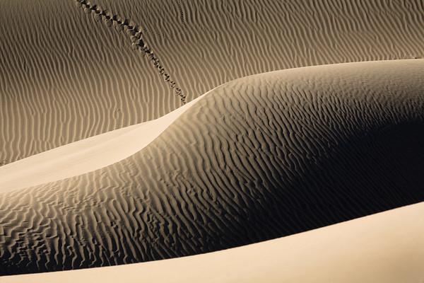 Dune Tracks 8217