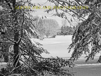 Snow-Trees-BW-2