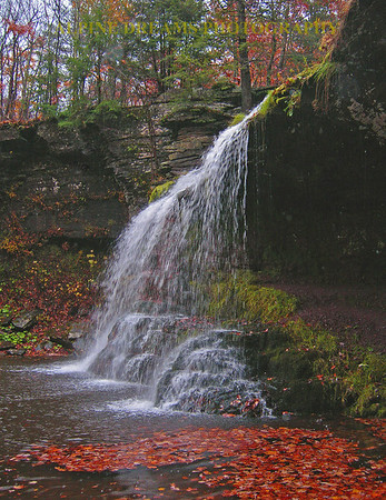 FALLS-AND-LEAVES