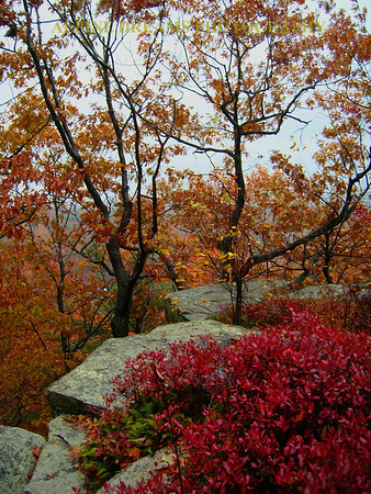 FALL-COLORS-ROCKS