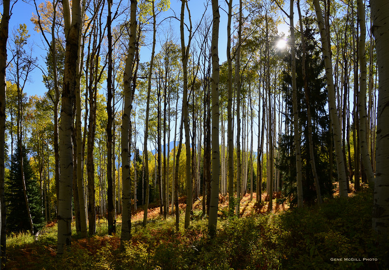 Early Autumn on Kebler Pass