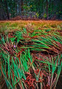 Flattened Grasses