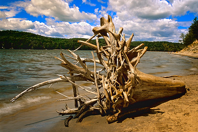 Beached Tree on Lac Simon