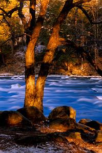 Tree at Chutes Wilson