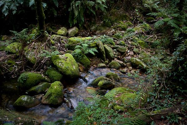Lugar Magico (en el bosque atlantico)