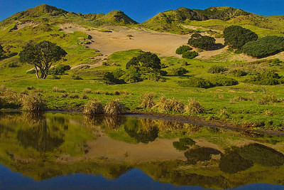A reflection of the sand dunes in a pond - East Cape Rd, East Coast, New Zealand