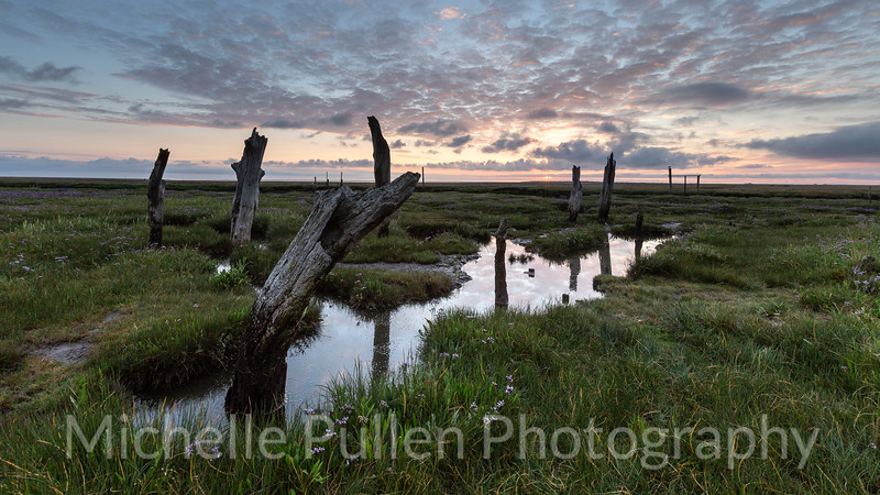 Harbour Marshes
