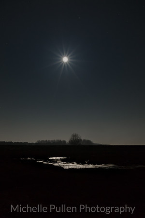 Moonlit Mud