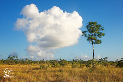 Big Cloud, Small Pine in the Florida Everglades on a winter afternoon.  The greens, blues and whites and the various shapes are fascinating.