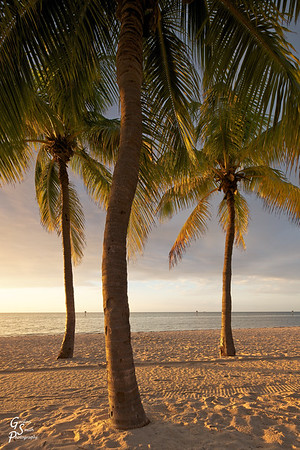 Three Palm Trees at sunrise from Smathers Beach, Key West