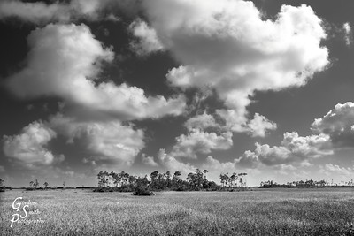 Everglade Clouds Beautiful vast grasslands spread for miles and miles in the Florida Everglades national park.  Beautiful pine tree clusters dot the landscape.