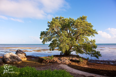 Geiger Beach Tree and Boulders off of Boca Chica Key, Florida
