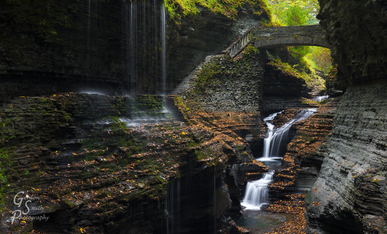 ferns cling to walls at watkins glen waterfall