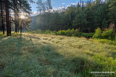 Sunlit Grass along the Black River