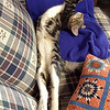It is really hard not to disturb a cat sleeping like this.