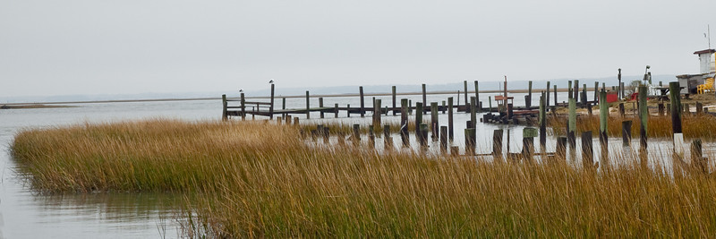 Chincoteague Island, MD (IMG_0736b)